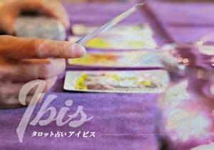 Ibis アイビス
