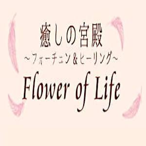 癒しの宮殿 Flower of Life